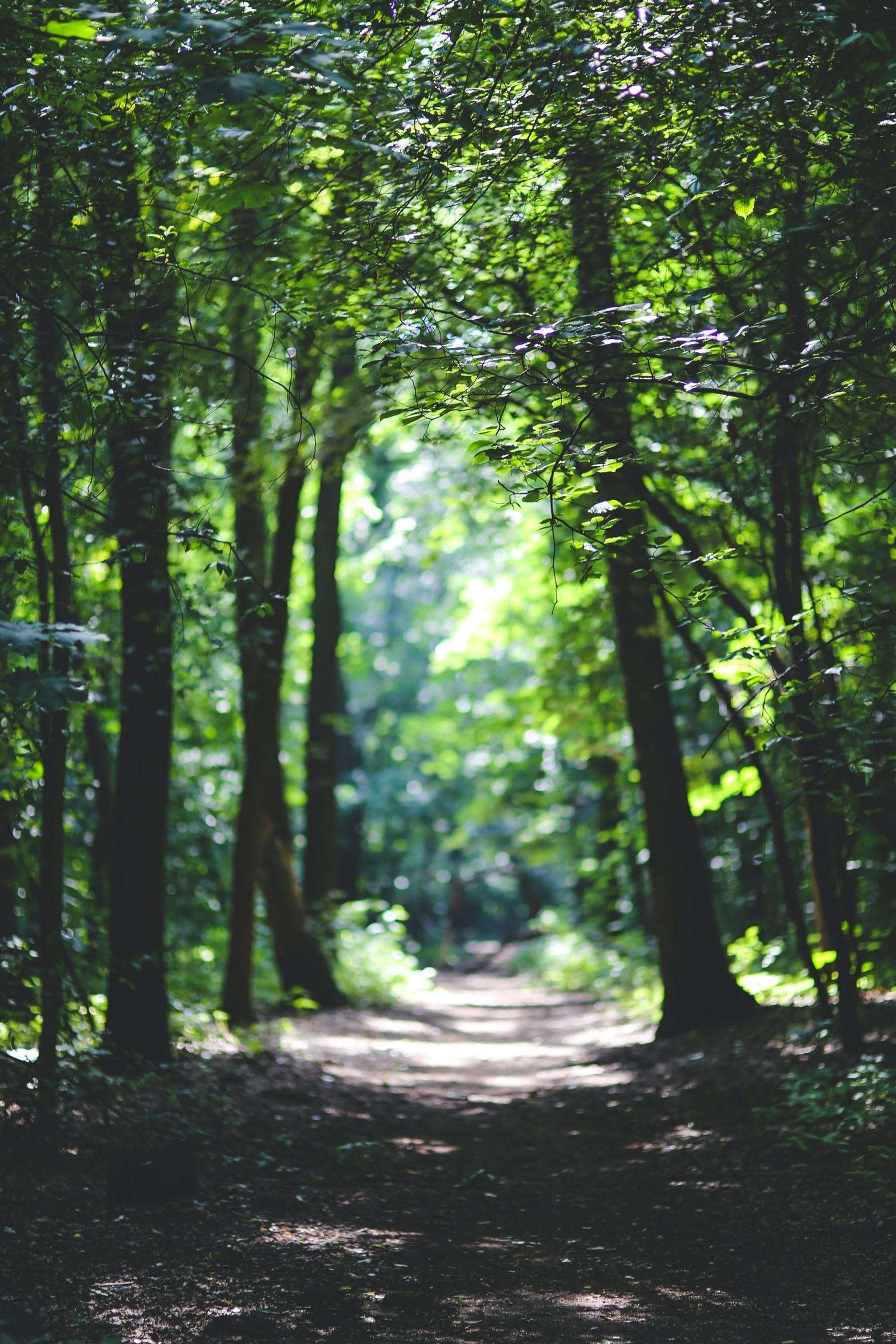 Rows of trees on Kirklees Trail